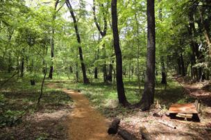 パラッツォの森